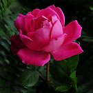 MOTHER'S DAY PINK ROSE by RoseMarie747