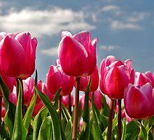 Tulips, tulips, tulips...... by Adri  Padmos