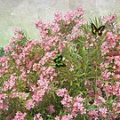 Flower - Pink Oleander  by PhotoArtByLiane
