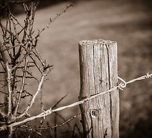 Fence Post Berkshire England by mlphoto