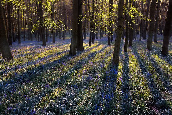 BlueBells II by redtree