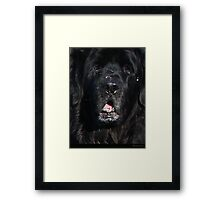 Bottlemutt Framed Print
