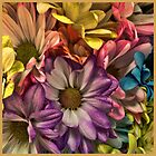 Spring flowers by DonaldCole