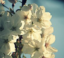 tree blossoms by Ms-Bexy