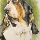Basset Hound by BarbBarcikKeith