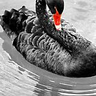 Black Swan by coldairballoon