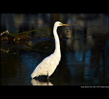 Ardea Alba - Great White Egret At Porpoise Channel - Stony Brook, New York by © Sophie W. Smith