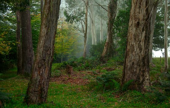 Bushland Solitude #2  - Mount Wilson - NSW  - The HDR Experience by Philip Johnson