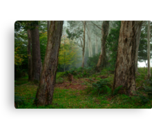 Bushland Solitude #2  - Mount Wilson - NSW  - The HDR Experience Canvas Print
