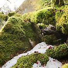 Moss, Hail and a Far Away Castle by AndyEllis82