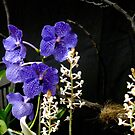 Vibrant Orchids in blazing purples by MarianBendeth