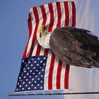 United we stand - Bald Eagle & American Flag by Brian D. Campbell