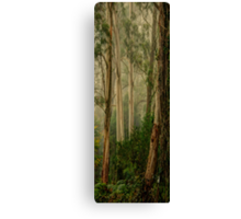 Guardians In The Mist- Mount Wilson, NSW Australia - The HDR Experience Canvas Print