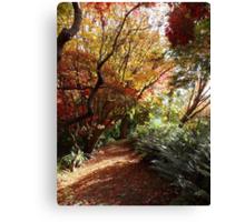 The autumn maple walk Canvas Print