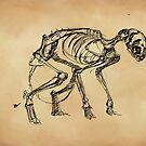 Dead Cat by hasanabbas