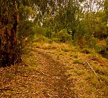 Merri Creek Path by Myles O'Neil-Shaw