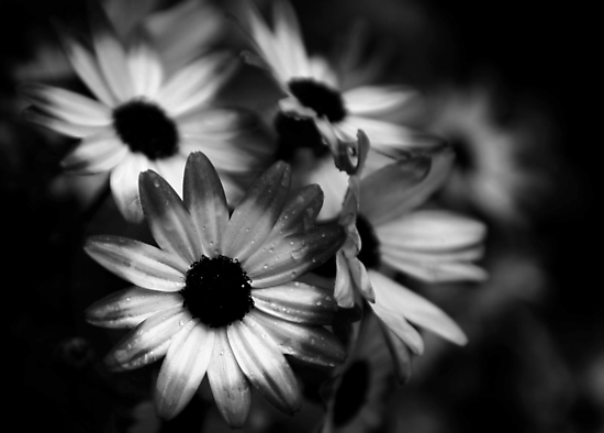 APRIL SHOWERS by Redtempa