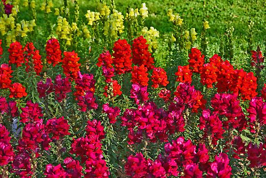 Colourful Park by Nira Dabush