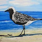 Grey Plover on the Gulf Coast of Florida by towncrier