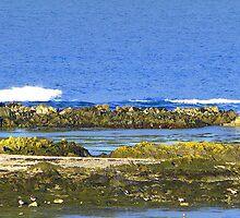 Ards Peninsula Shoreline by Fara
