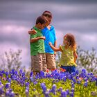 A Day in the Bluebonnets by Terence Russell