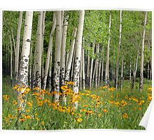 Aspen Grove and Wildflower Meadow Poster