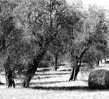 Pastoral.. by JOSEPHMAZZUCCO