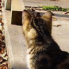 Kitten by WildestArt