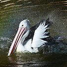Australian Pelican Shower Time by Margaret Saheed
