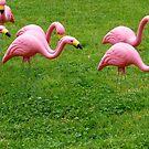 Flamingos On Parade by WildestArt