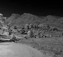 Road to Flinders by Andrew Dickman