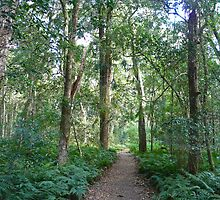 Paradise Walk, Bunya Mountains N P, Queensland (2) by Margaret  Hyde