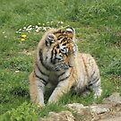 young tiger cub by Martynb
