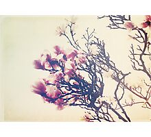 The Crowning Glory of Spring Photographic Print