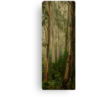 The Long Shot - Mount Wilson - NSW  - THE HDR Experience Canvas Print