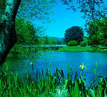 Lake Sacajawea, Longview, Washington, USA by lascelles795