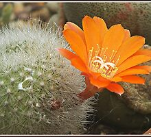 """"""" After years of being Dormant, a flower appears"""" by mrcoradour"""