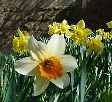 Daffodil and the Wall by Jennifer J Watson