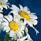 Daisy Blue by CathyS