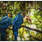 """Macaws #1"" by Bob Adams"