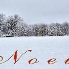Noel by webdog
