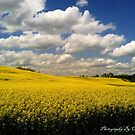 Fields of Gold by cdfletcher