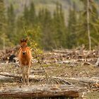 Little Big Horse by JamesA1
