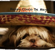 Happy Cinco De Mayo by Terry Arcia