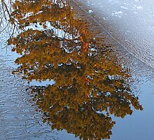 Reflections Through the Ice by Bill Hendricks