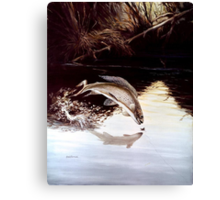 Grayling Leaping Out Of The Water Canvas Print