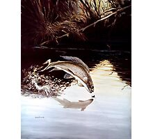 Grayling Leaping Out Of The Water Photographic Print