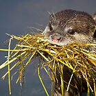 Short-clawed Asian Otter by alan tunnicliffe