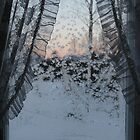 Frost on window with old curtains. Sunset. by UpNorthPhoto