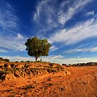 Desert tree - Lake Mungo by Hans Kawitzki